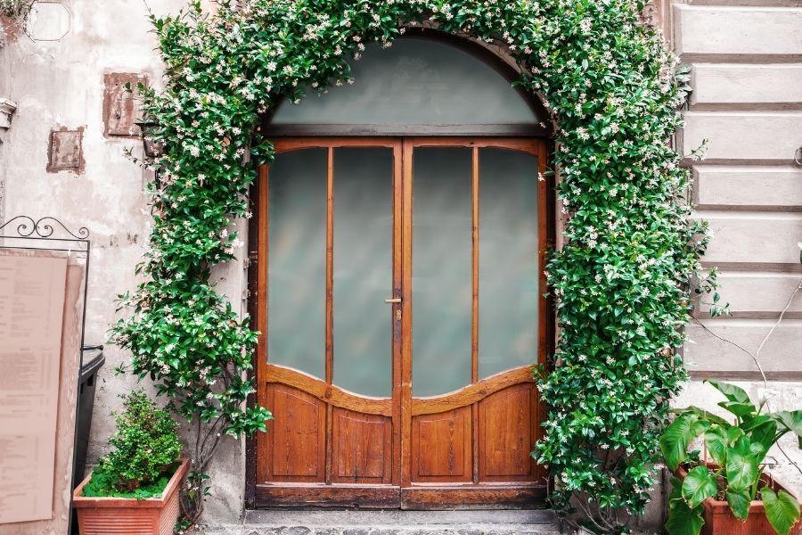 front door ideas climbing plant